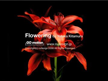 flowering02.jpg
