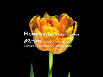 flowering03.jpg