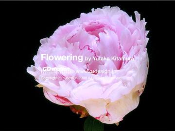 flowering04.jpg