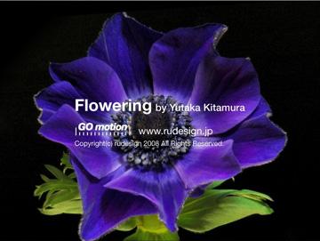 flowering05.jpg