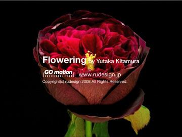 flowering06.jpg