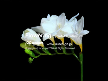 flowering07.jpg