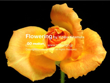 flowering08.jpg