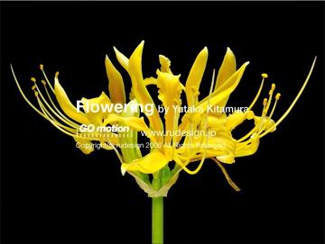 flowering10.jpg